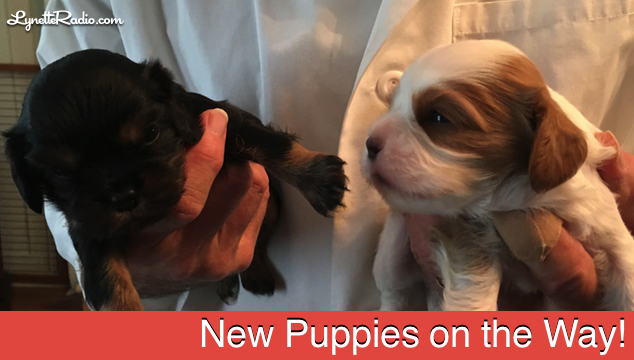 New Puppies on the Way!